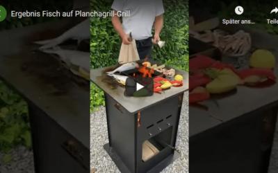 Fisch auf Plancha-Grill